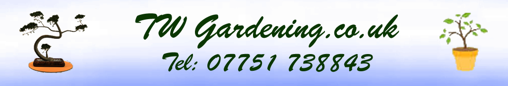 Garden Maintenance Services Richmond - Twickenham Areas: Tel David 07751 738843